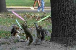 Jedisquirrels_2